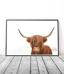 Texas Longhorn Home Decor Home Decor Cow Art Print Poster Highland Cow Print Cow