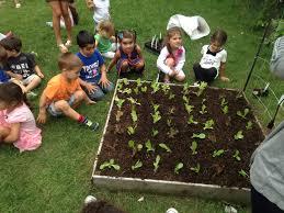 vegetable gardens u2013 urban seedling