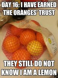 Orange Memes - orange memes image memes at relatably com