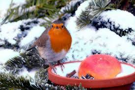 ten winter tasks for vegetable gardeners tips on how to be eco