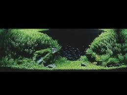 Aquascape Takashi Amano Takashi Ama Sequa
