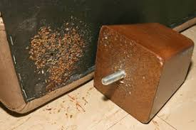 Bed Bug How To Kill Bed Bugs Without Throwing Away Your Furniture