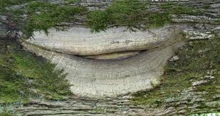 free images nature forest wood trunk bark formation