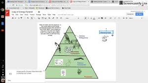 trophic energy pyramid nature scene for drawing