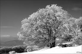 17 snowy tree pictures
