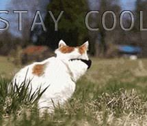Stay Cool Meme - stay cool images on favim com