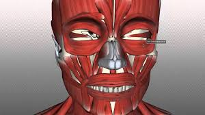 Parts Of The Face Anatomy Muscles Of Expression Anatomy Tutorial Part 1 Youtube