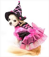 Small Puppy Halloween Costumes 70 Pet Masquerade Images Animals Animal