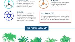 Air Purifying Plants 9 Air by This Graphic Shows The Best Air Cleaning Plants According To Nasa