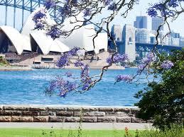 Botanic Garden Sydney Royal Botanic Garden And The Domain Sydney Australia Official