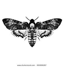 butterfly skull on back dead stock vector 650908267