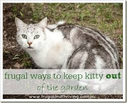 How To Keep Cats Out Of Your Backyard Frugal Ways To Keep Kitty Out Of The Garden