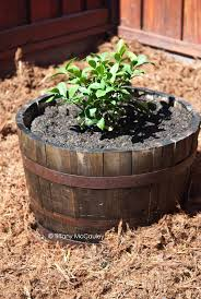 Half Barrel Planter by To Fix Loose Rings On An Old Wine Barrel Planter
