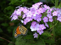 wordsworth poem for butterflies fascination u0026 meditation