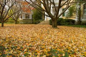 In Front Yard - yellow leaves lay on grass in front yard of suburban house stock