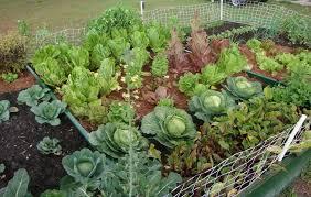 organic vegetable garden mulch ideas home inspirations