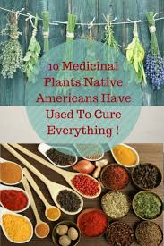 plants native to france 334 best native american images on pinterest native american