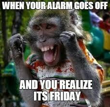 Baby Monkey Meme - coolest baby monkey meme monkey friday funny pinterest monkey