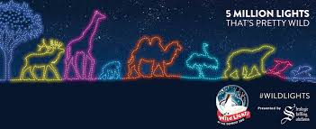 Toledo Zoo Christmas Lights by Home Detroit Zoo