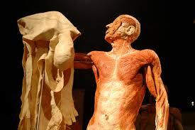 Human Anatomy Integumentary System Larsen Nicole A U0026 P Unit 3 Integumentary System