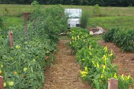 Types Of Vegetable Gardening by 4 Easy Steps To Prepare The Garden This Fall For Next Year Old