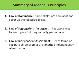 summary of mendel u0027s principles