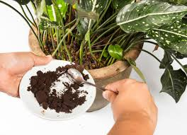 Coffee Grounds In Vegetable Garden by Coffee Ground Uses 11 Ways They Can Help At Home Bob Vila