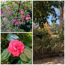 San Francisco Flower Garden by San Francisco Botanical Garden In Pictures U2013 Bright Lights Of America