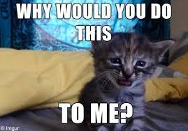 Sad Kitty Meme - la page geek un nouveau lol cat une appli 100 emoji 100 emoji