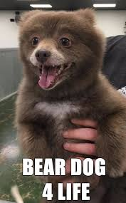 Meme Bear - no one can figure out if this adorable animal is a bear or a dog