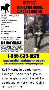 Lost Dog Meme - lost dog grapevine circle londonderry nh granite state dog recovery