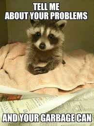 Therapist Meme - i present you with raccoon therapist meme guy