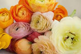 philadelphia florist flower delivery by abundant blooms