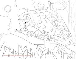 macaw coloring page macaws that you can print pictrues free