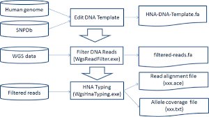 genotyping of human neutrophil antigens hna from whole genome