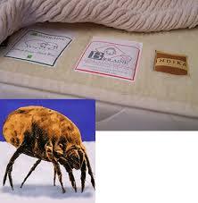 Dust Mite Crib Mattress Cover Bean Products Inc Dust Mite Proof Mattress Pad