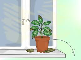 home plants how to provide the right light requirements for indoor plants