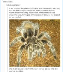Afraid Of Spiders Meme - so you guys are afraid of spiders meme by soydolphin memedroid