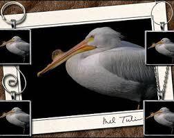 pelican photo etsy