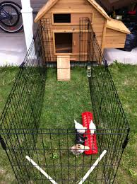 Chickens For Backyard by Edmonton Alberta Canada And Area Backyard Chickens