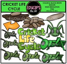 cricket cycle clip bundle welcome to educlips store