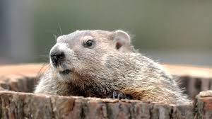 groundhogs youtube