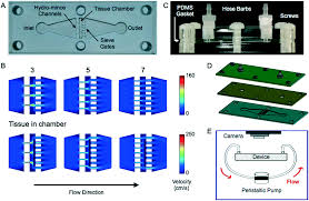 microfluidic device for rapid digestion of tissues into cellular