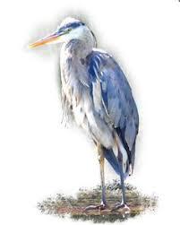 heron paintings framed blue heron painting steady gaze