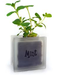 Window Sill Herb Garden by Cute Glass Block Herb Pot With Mint Great For Windowsills And For