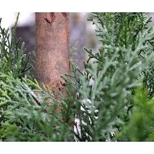 tronc d arbre artificiel boule de conifère alumi x2 145 cm anti uv plantes artificielles