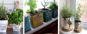 plante pour cuisine différents supports pour faire pousser des plantes aromatiques