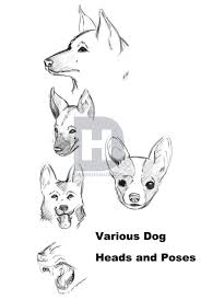 how to draw a realistic dog draw real dog step by step drawing