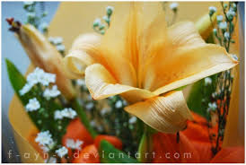 25 most beautiful flowers pictures