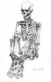 engravings of anatomical sketches by johann georg heck perfect